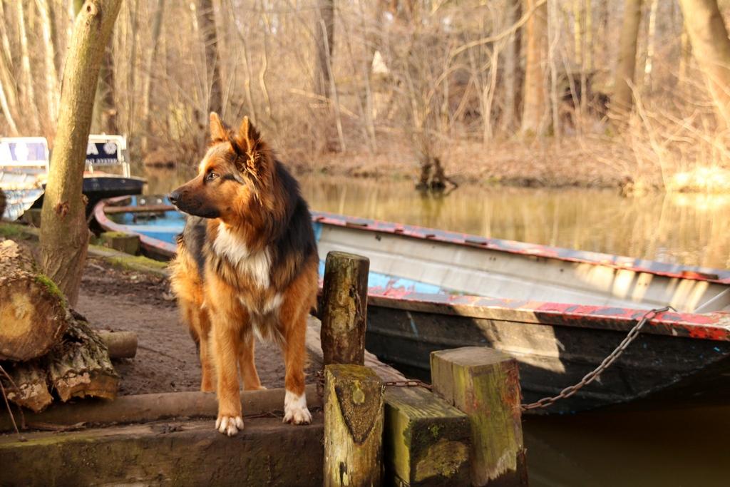 Der Hund des Postfahrers am Kahn