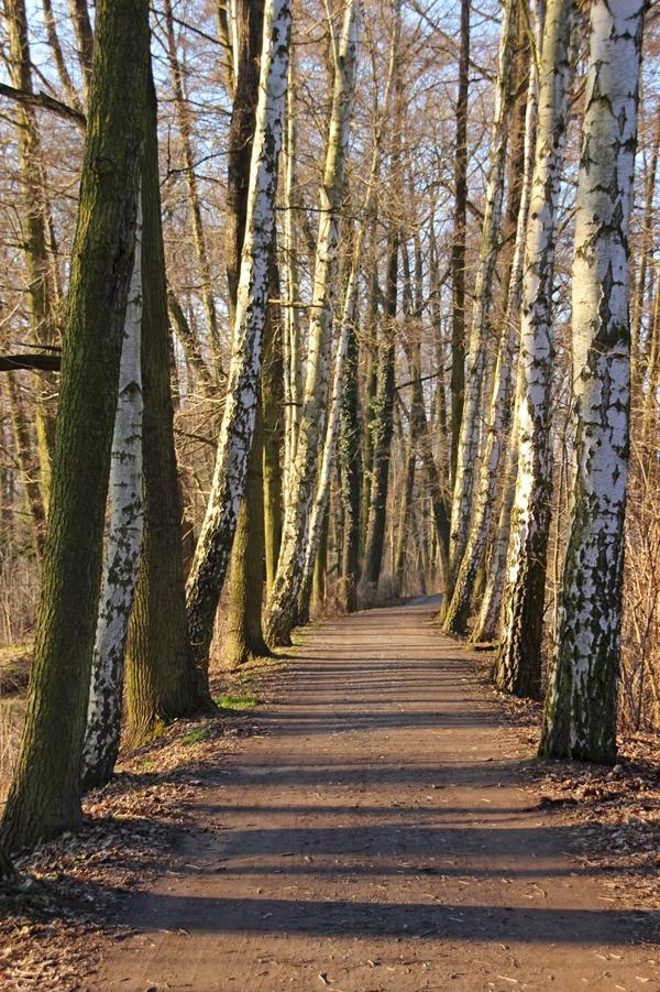 Allee durch den Spreewald