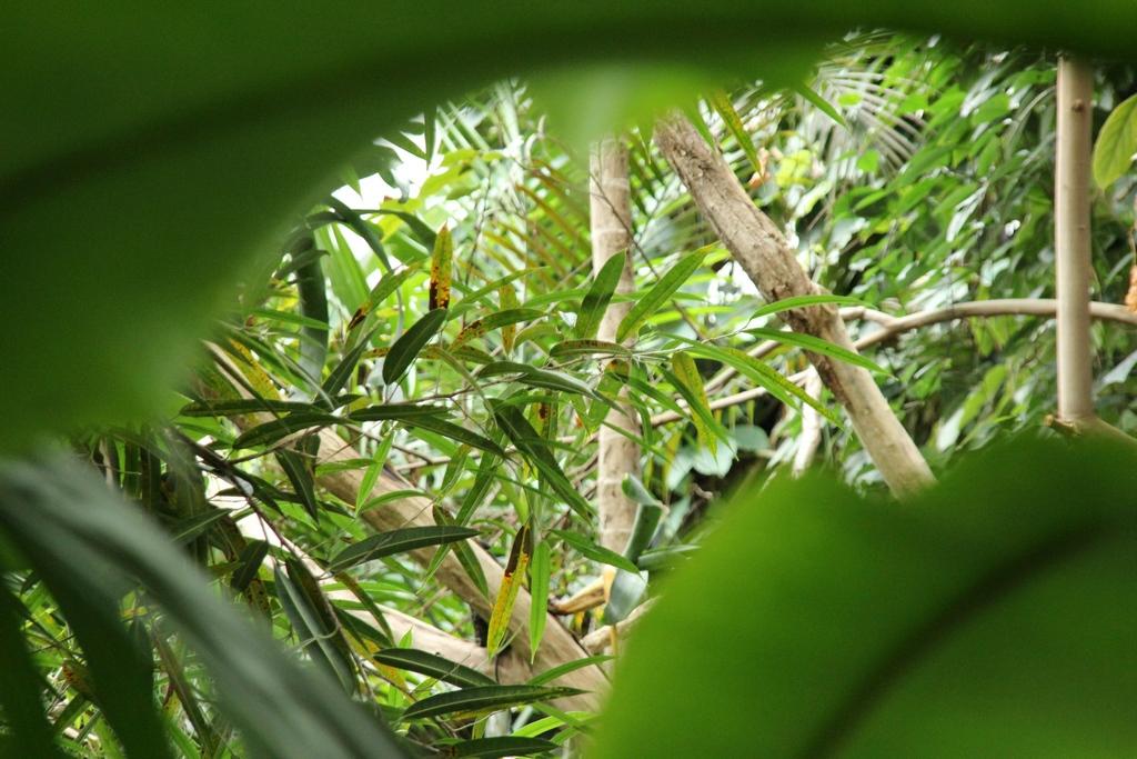 Dschungel in der Biosphäre Potsdam
