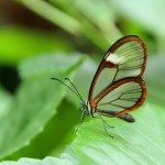 Schmetterlingshaus in der Biosphäre Potsdam
