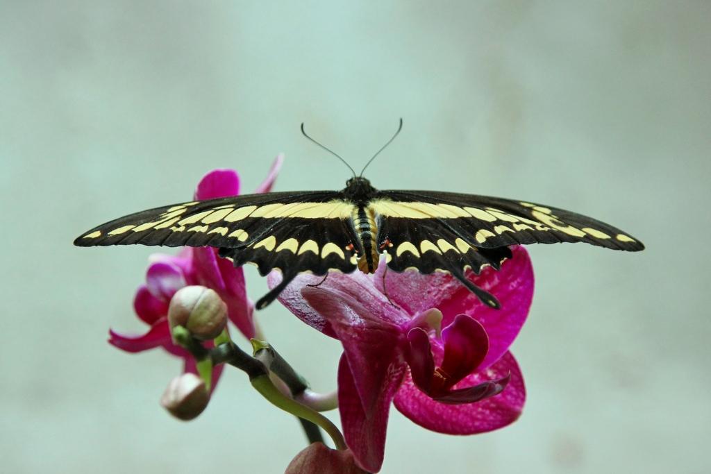 Das Schmetterlingshaus in der Biosphäre Potsdam