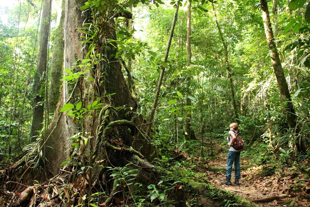 Regenwald im Kubah Nationalpark auf Borneo