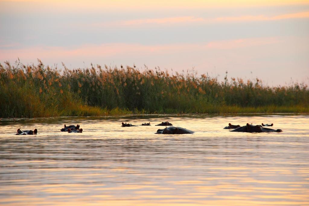 Hippo-Pool bei der Safari im Okavango Delta