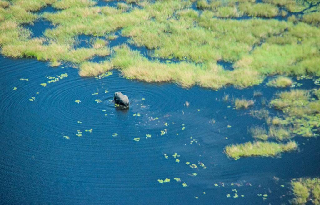 … und der Bull streift ganz in der Nähe durchs Wasser