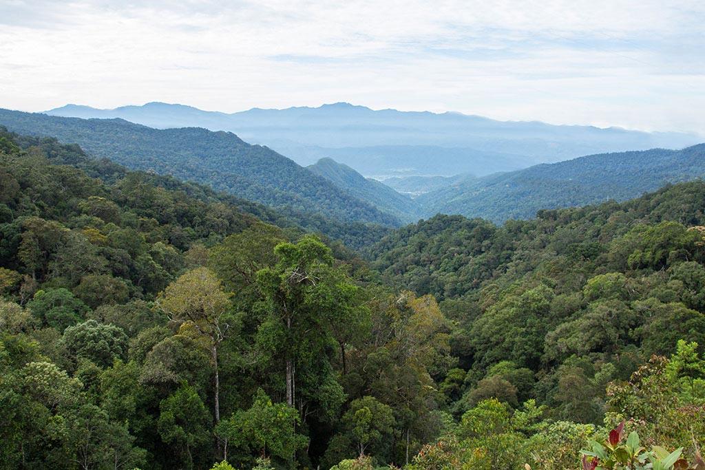 Ausblick von der Crocker Range ins Tal