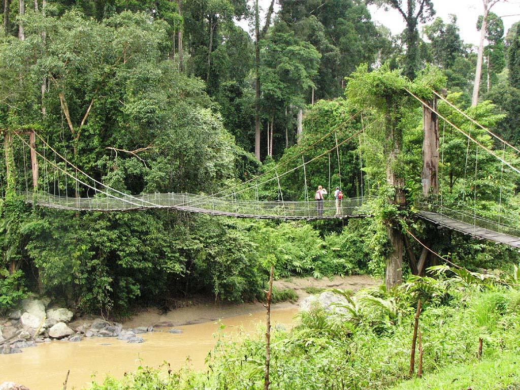 Über kleine Brücken durch den Regenwald des Danum Valley