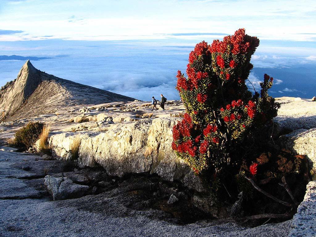 Das Plateau auf der Spitze des Munt Kinabalu (Copyright Ariel Steiner @ Wikimedia Commons)