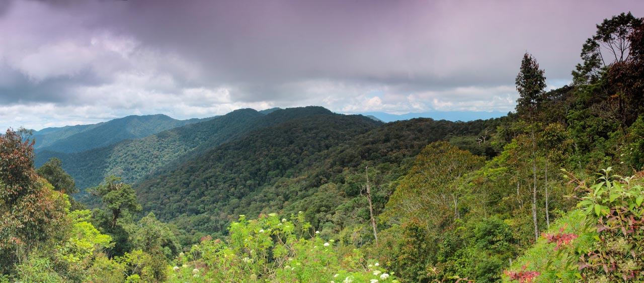 Borneo - Natur wohin das Auge reicht