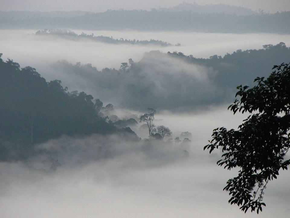 Eines der letzten Rückzugsgebiete seltener Arten: das Danum Valley (Copyright Rob and Stephanie Levy @Wikimedia Commons)