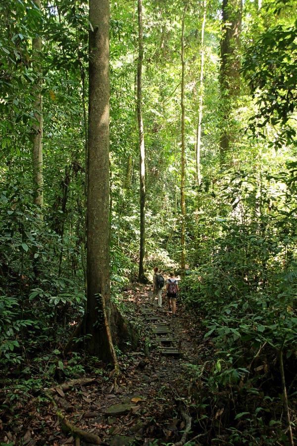 Wandern durch den Kubah Nationalpark...