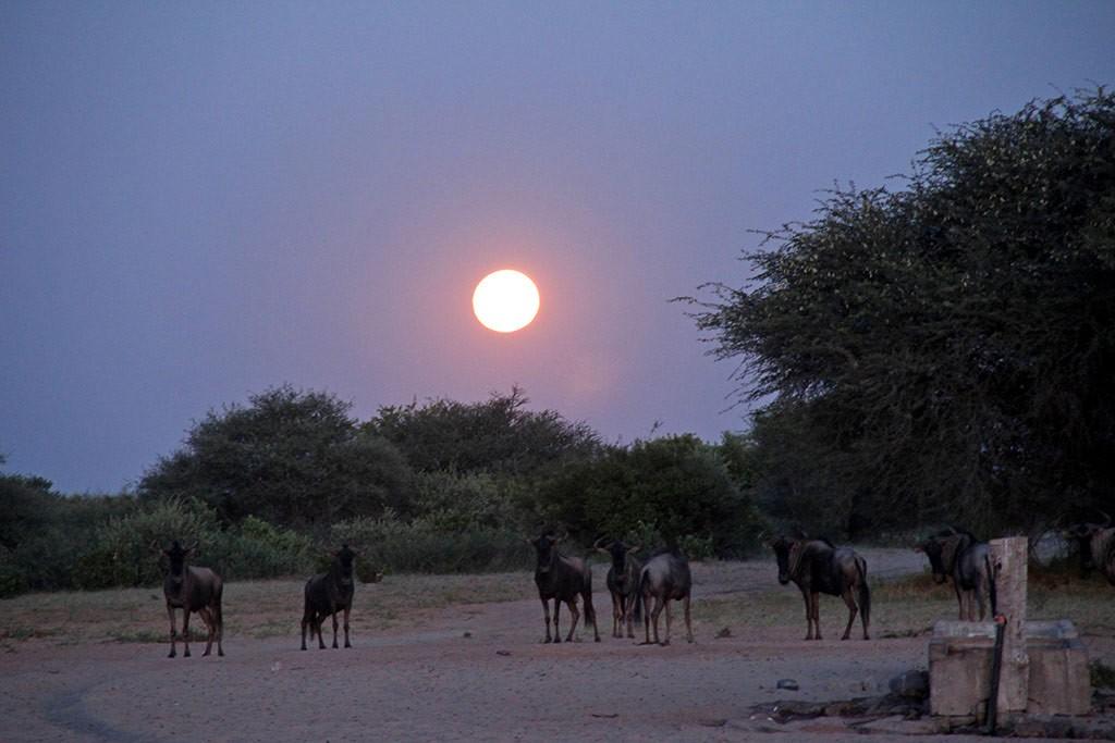 Modisa_Botswana_Tiere_Nacht