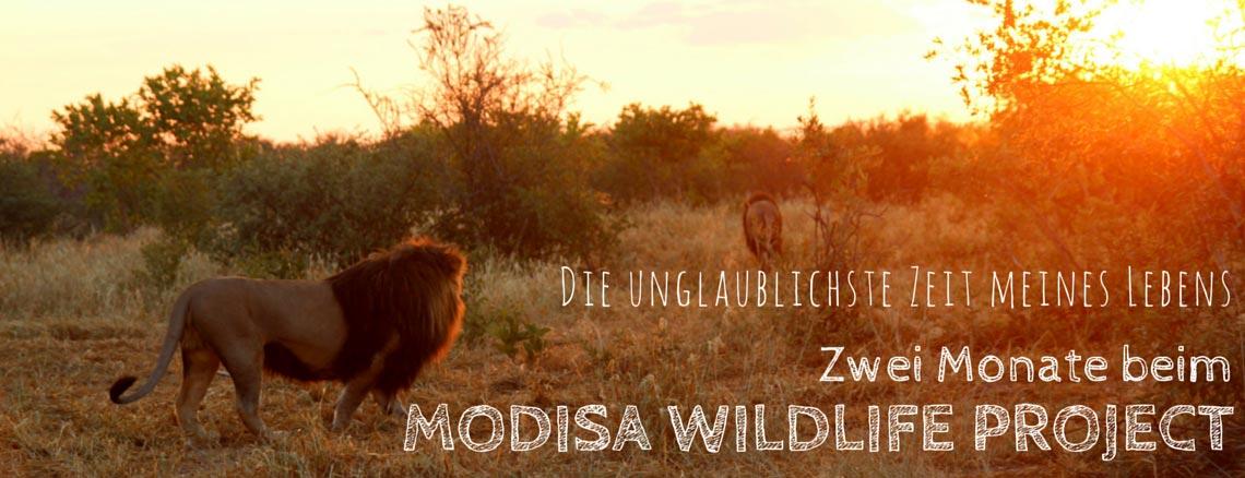 Modisa_Wildlife_Project_Botswana