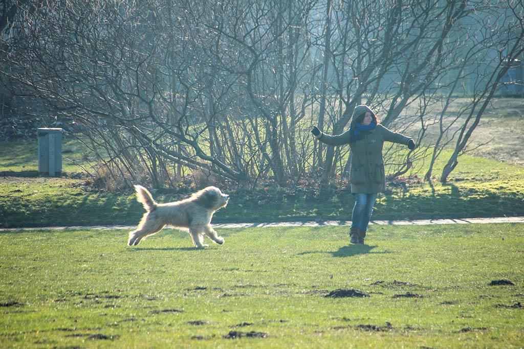 Hundeauslauf im Treptower Park