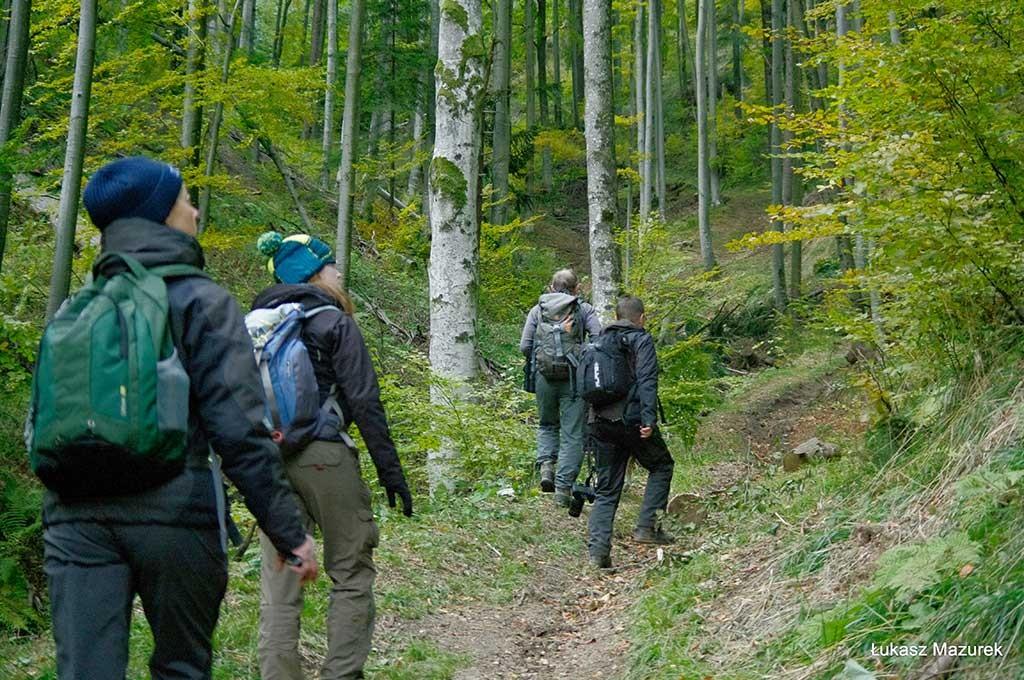 Waldwanderung in Rumänien