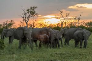 Die Herde bei Sonnenuntergang